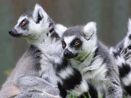 Jardim Zoológico de Lagos
