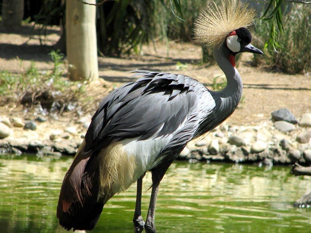Zoo Lagos